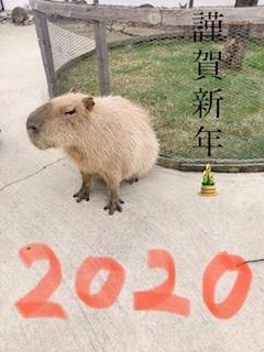 熊本市中央区のセクシークラブForYou(フォーユー)熊本店の写メ日記 ☆あけましておめでとうございます☆画像